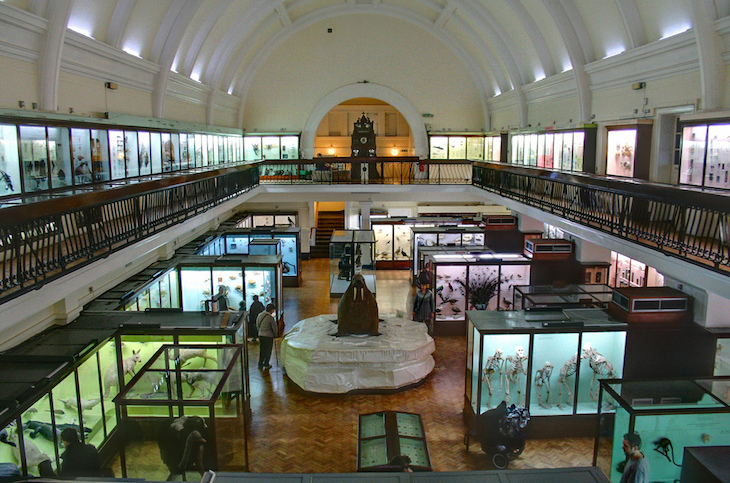 Family-friendly, cheap sightseeing options in London: Horniman Museum Aquarium