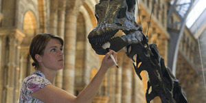 What's It Like Cleaning Dippy The Diplodocus?