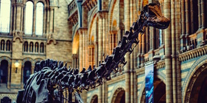 Everything You Need To Know About Dippy The Dinosaur