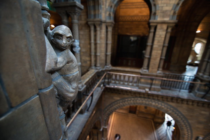 7 Things You Probably Didn't Know About The Natural History Museum