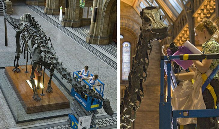 What's it like cleaning the Natural History Museum's Dippy?