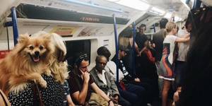 Animals On The Tube