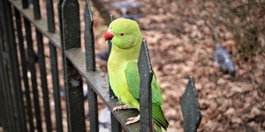 Kensington Gardens Has Parakeets That Will Land On Your Hand