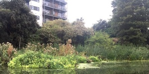 How Reedbeds Can Help Save London's Rivers