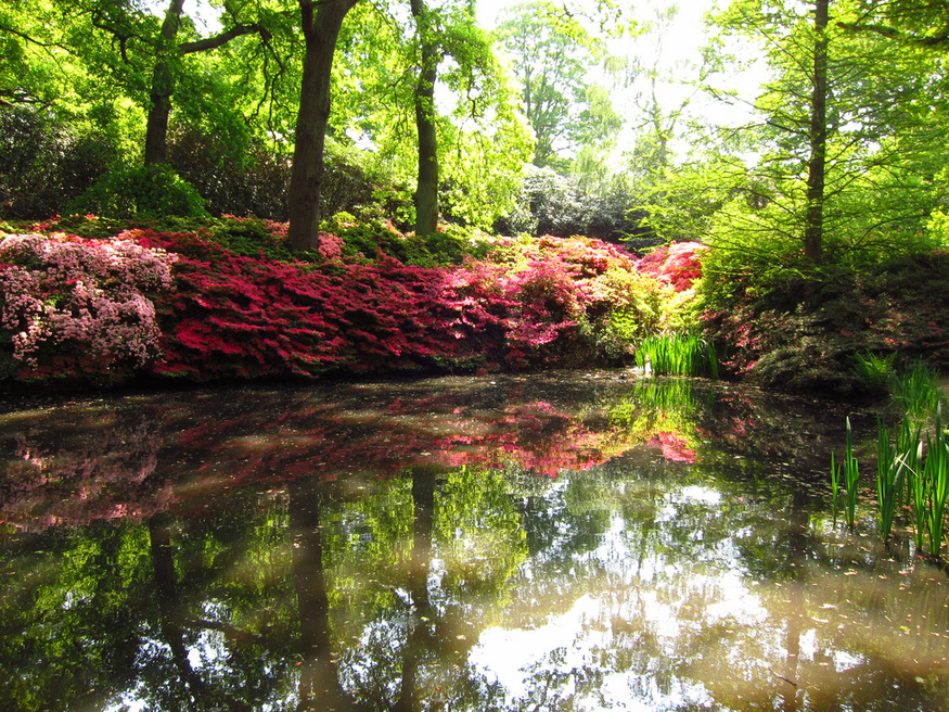 Most romantic London days out and date ideas: Isabella Plantation in Richmond Park