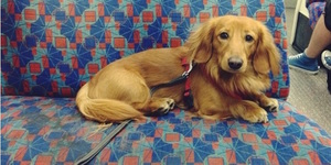 Dogs Of London