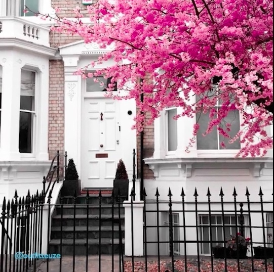 Video: Springtime In Chelsea
