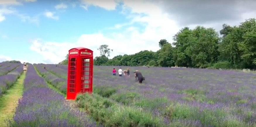 Did you know about this 25 acre lavender field on the outskirts of London?