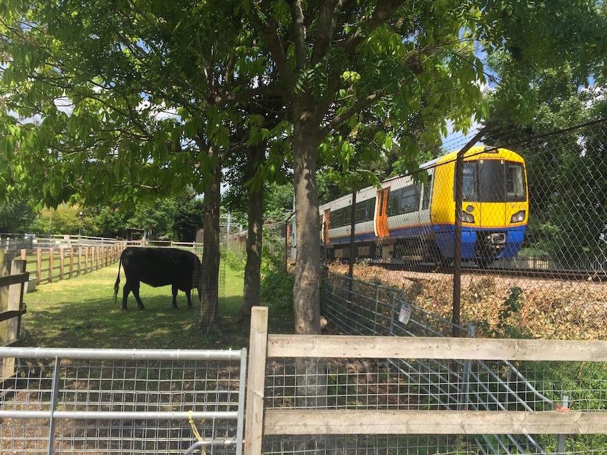 The City Farm That Straddles A Train Line