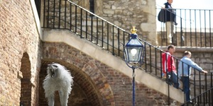 Lions And Monkeys And Bears Used To Live In The Tower Of London