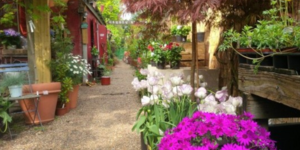 London's Most Colourful Garden Centre