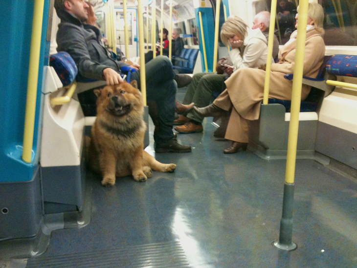 7 Things We've Learned Travelling With A Dog On London Transport