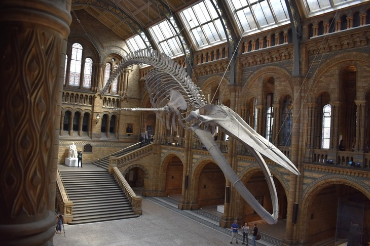 Introducing Hope, The Natural History Museum's New Centrepiece