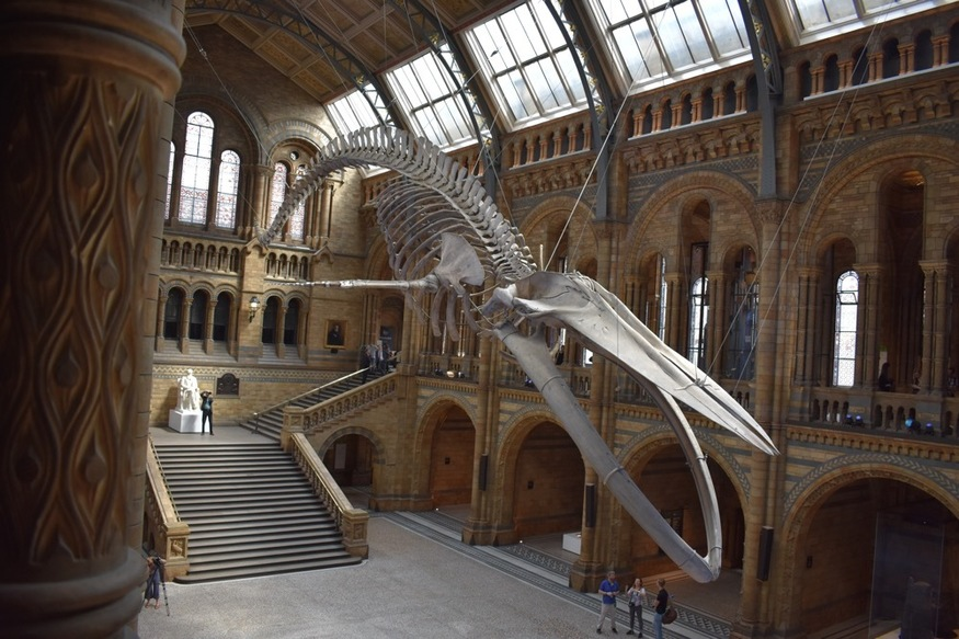 The Natural History Museum has finally unveiled Dippy's replacement
