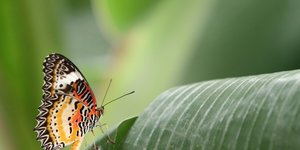South London Has A New Tropical Butterfly House