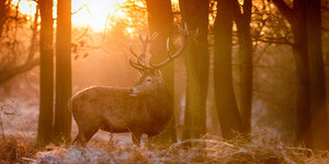 In Photos: Richmond Park At Its Best