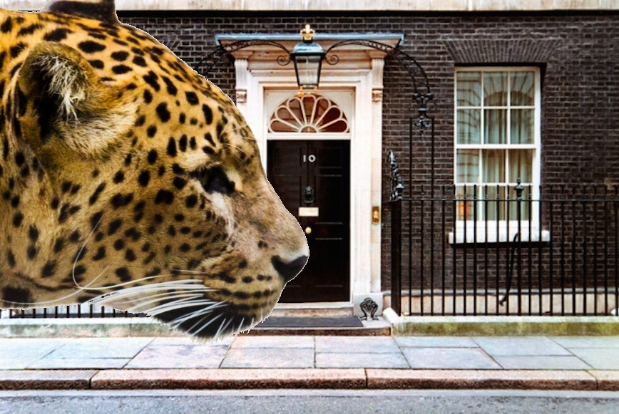 When A Leopard Was Taken To Meet The Prime Minister At Downing Street