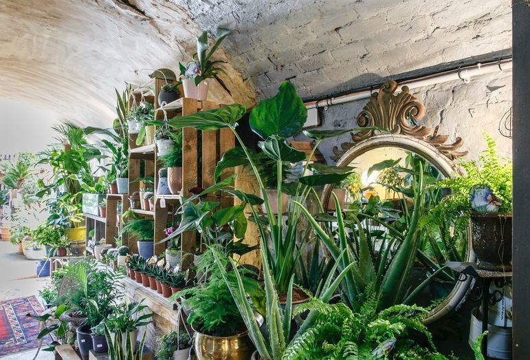 A Hidden Garden Centre In Nunhead