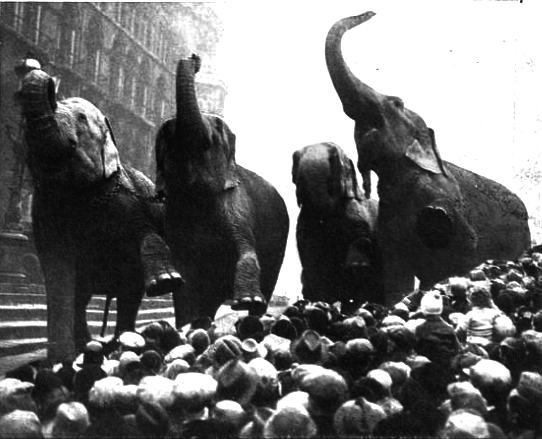 How a fake lion caused elephants to stampede... in London