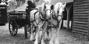Enjoy Wintry Richmond Park From Your Very Own Horse-Drawn Carriage