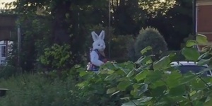 Have You Seen The Mysterious White Rabbit Of Barnes?