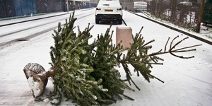 Where To Recycle Or Dispose Of Your 2018 Christmas Tree In London