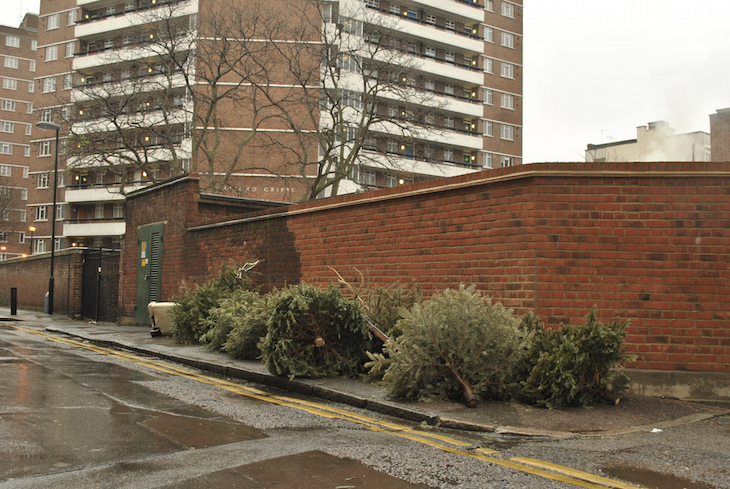 Recycle your London Christmas tree, many boroughs will collect it for you