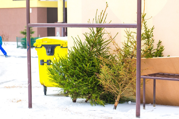 Dispose or recycle your Christmas tree this year in London, using this handy borough guide