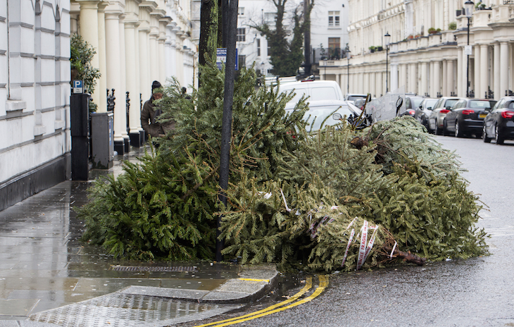 Which London boroughs will collect your Christmas tree? Here's a handy list