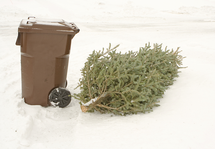 Find out where to bin (or recycle) your Christmas tree in London this year