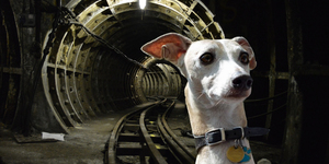 The Curious Incident Of The Dog On The Northern Line