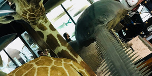 Have You Visited The Other Natural History Museum?