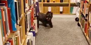 Hot Diggety Dog! The Kennel Club In Piccadilly Has A Whole Dog Library