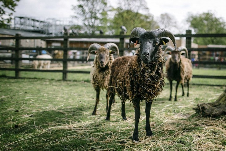 Head to one of London's city farms and spend Mother's Day accompanied by furry friends