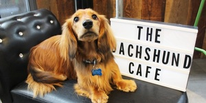 Oh My Dog: A Dachshund Cafe Is Coming To London
