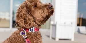 A Dog Show For The Poshest Of Pooches Comes To London