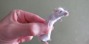 This Taxidermy Class Is The Most Fun You Can Have With A Dead Mouse