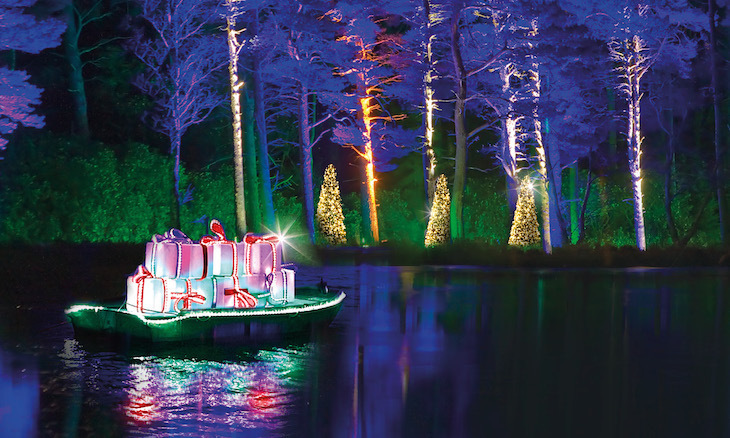 Christmas lights festival 2018 at Bedgebury Pinetum