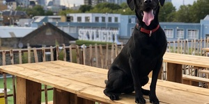 A Rooftop Party For Dogs (And Their Humans) Comes To London