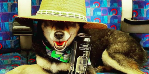 Canine Commuters: Our Favourite Ever Photos Of Dogs On The Tube