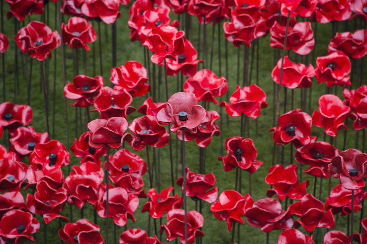 Tower of London poppies returning to London