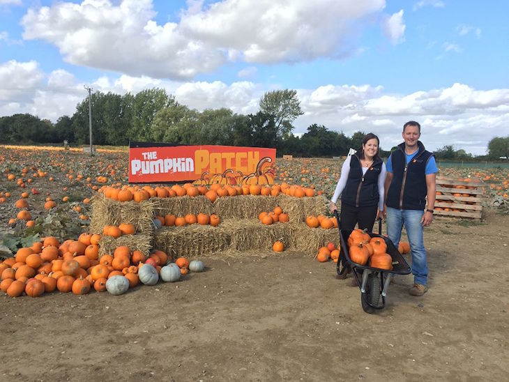 The Pumpkin Patch at Foxes Farm, Essex - pumpkin picking near London