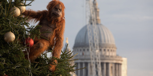 Iceland Brings Its 'Banned' Christmas Ad To London With Lonely Orangutan