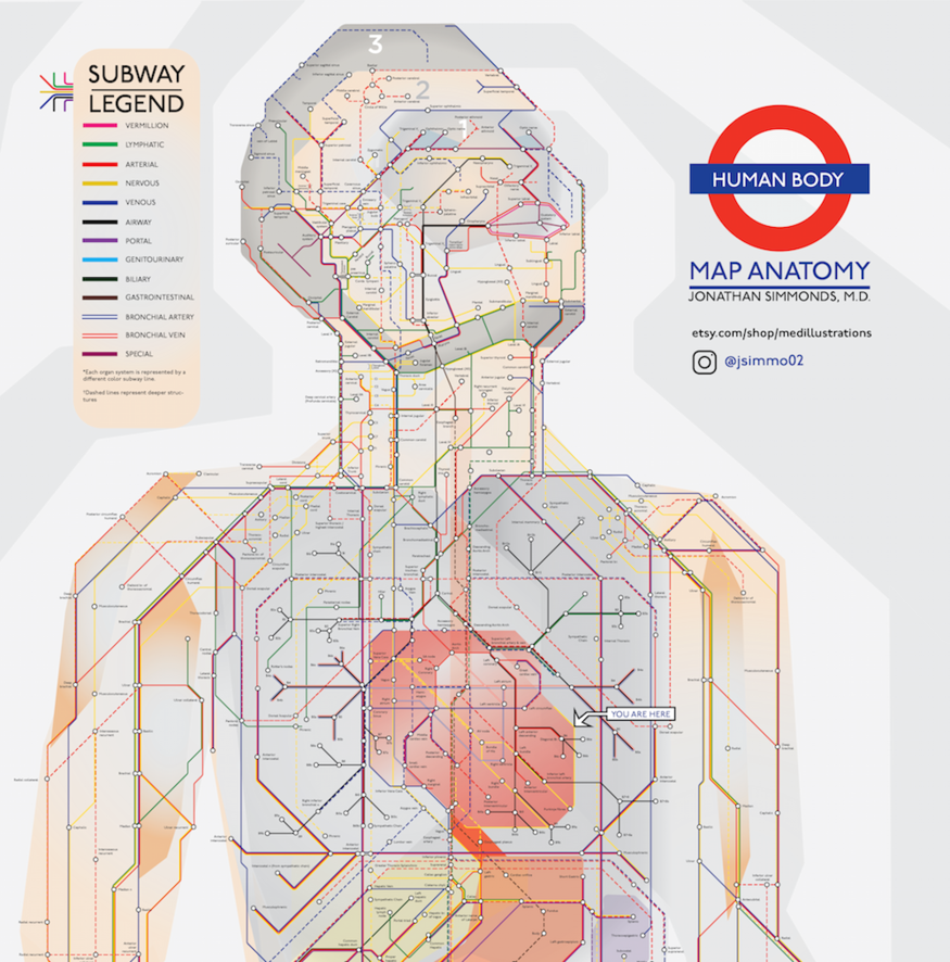 The Human Body As A Tube Map Londonist