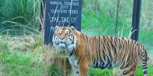 In Photos: Zookeepers Are Counting All Of London Zoo's Animals