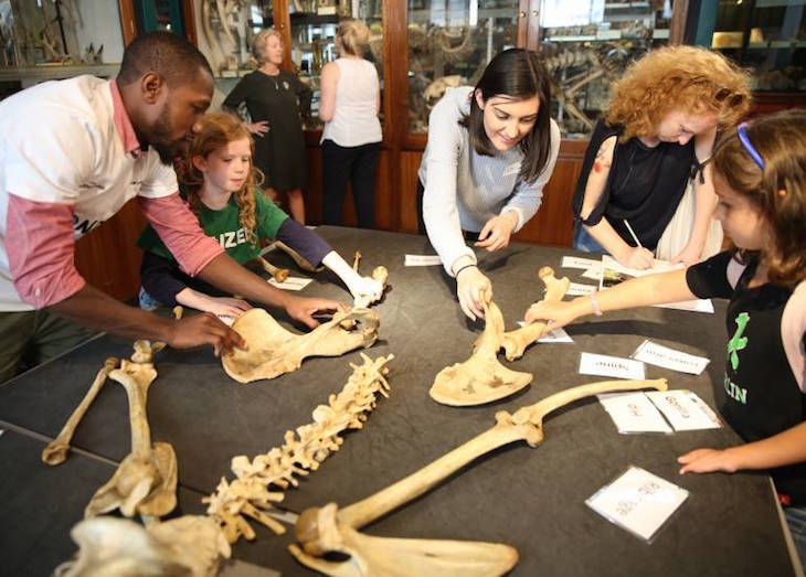 Alternative family days out in London: Grant Museum of Zoology