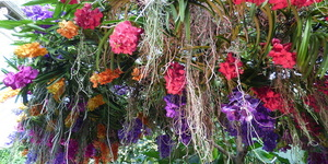 15 Photos Of The Fantastically Colourful Kew Gardens Orchid Festival 2019