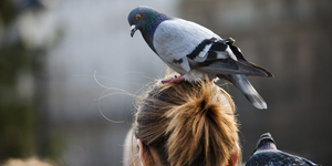When Did We Start Hating On Trafalgar Square's Pigeons?