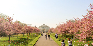 Where (And When) To See Cherry Blossom In London
