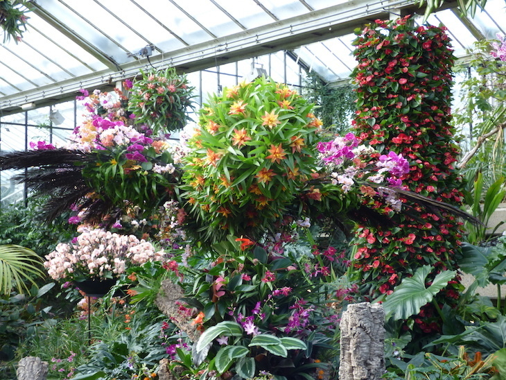 kew, kew gardens, kew gardens orchid festival, kew orchid festival, kew orchid festival 2019, orchids, flowers, flower festivals, london festivals, things to do in london, london events, things to do in london in february, things to do in london in march, things to do in london in february half term, 2019, photos of kew gardens